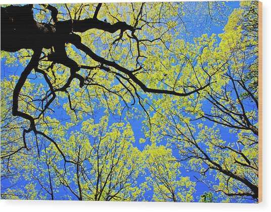 Artsy Tree Canopy Series, Early Spring - # 03 Wood Print