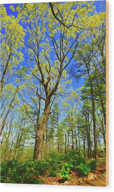 Artsy Tree Series, Early Spring - # 04 Wood Print