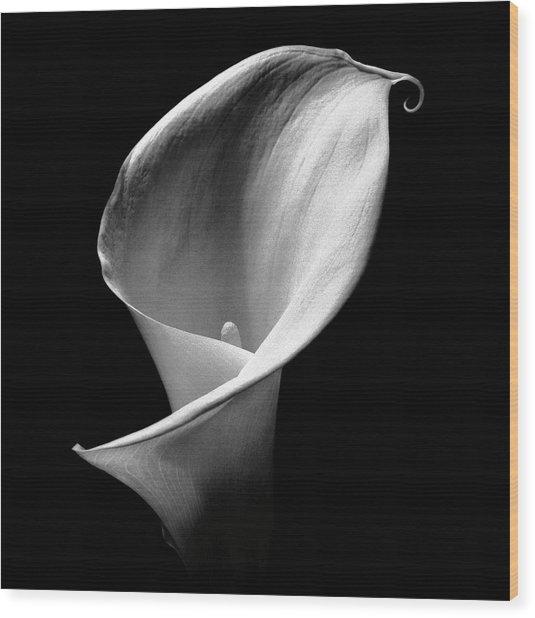 Arum Lily Wood Print