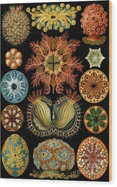 Ascidiae Wood Print
