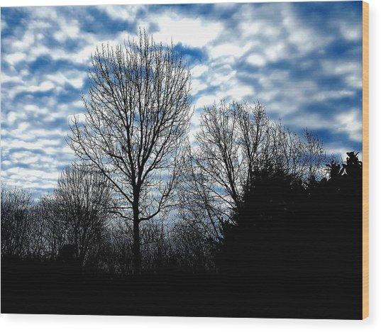 Ash Trees Against A Mackerel Sky Wood Print