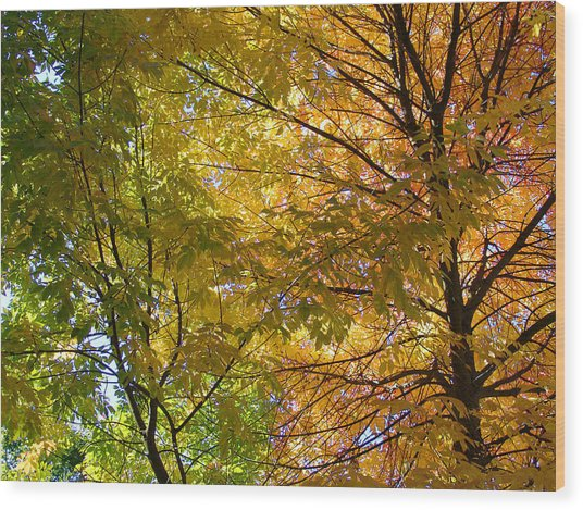 Ashland Autumn Wood Print