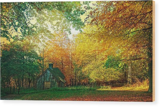Ashridge Autumn Wood Print