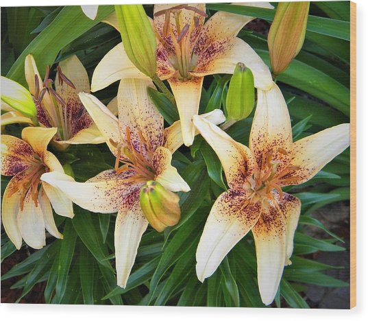 Asiatic Lilies Wood Print