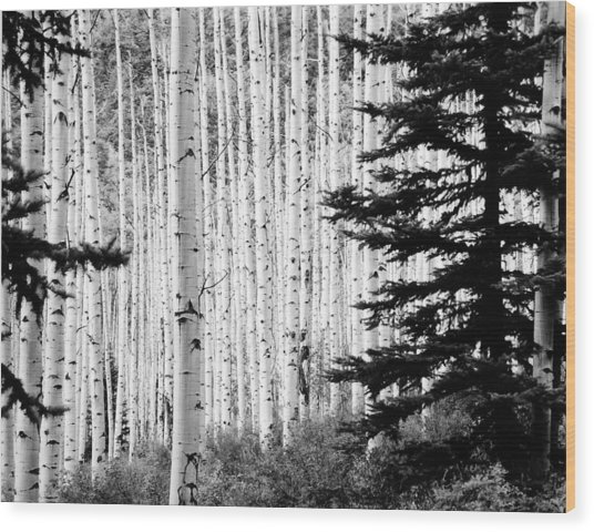 Aspen Afternoon Wood Print