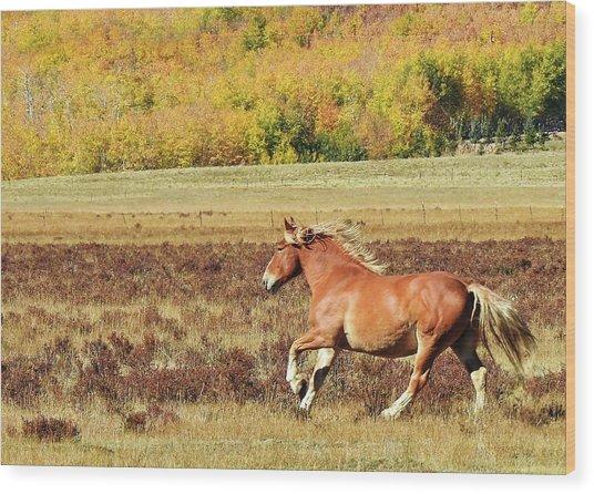 Aspen And Horsepower Wood Print