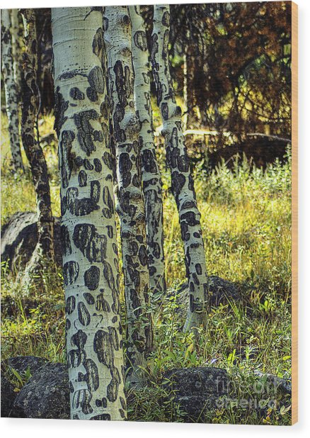 Aspen Bark Wood Print