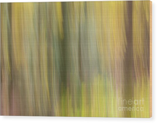 Aspen Blur #2 Wood Print