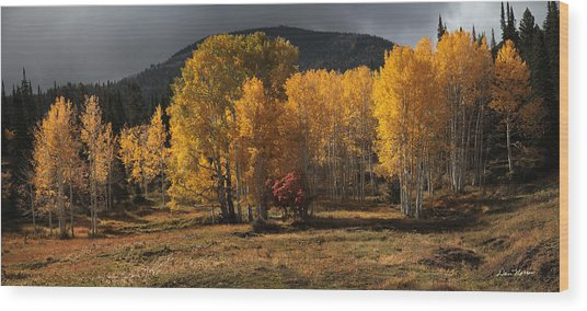 Aspen Glow Panorama Wood Print