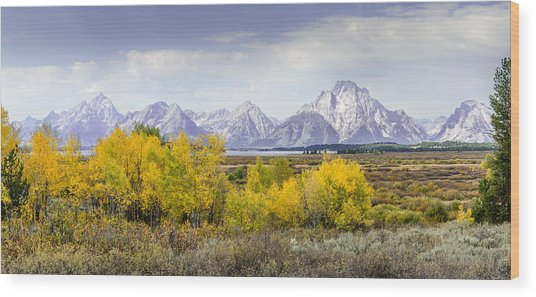 Aspen Gold In The Tetons Wood Print