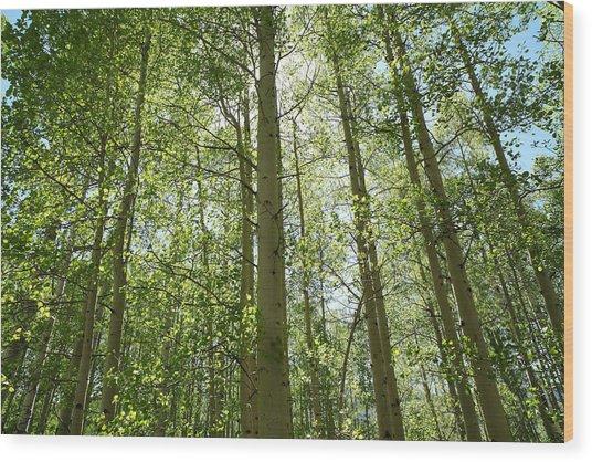 Aspen Green Wood Print