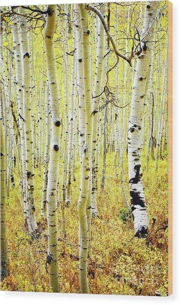 Wood Print featuring the photograph Aspen Grove by Scott Kemper