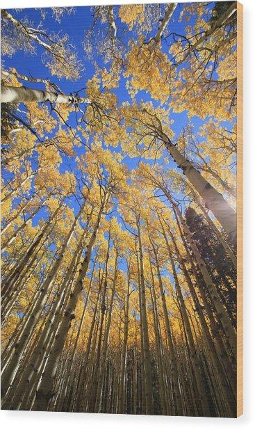 Aspen Hues Wood Print