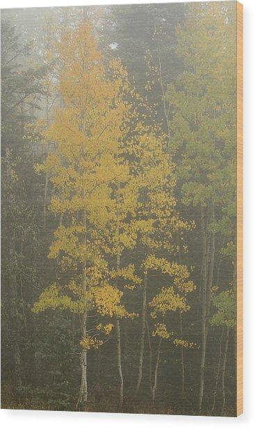 Aspen In The Fog Wood Print
