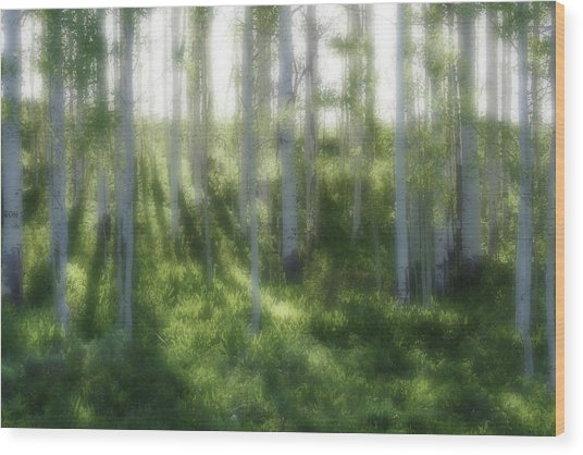 Aspen Morning 2 Wood Print