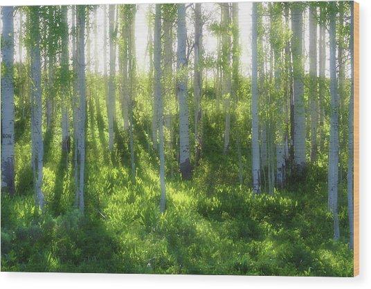 Aspen Morning 3 Wood Print