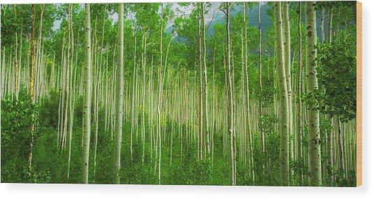 Aspen Pano Wood Print by Stuart Deacon