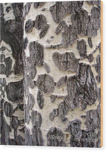 Aspen Scars Wood Print
