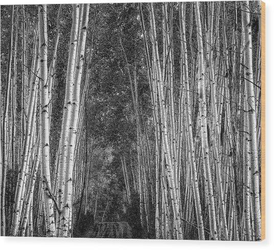 Aspen Stalwarts Wood Print