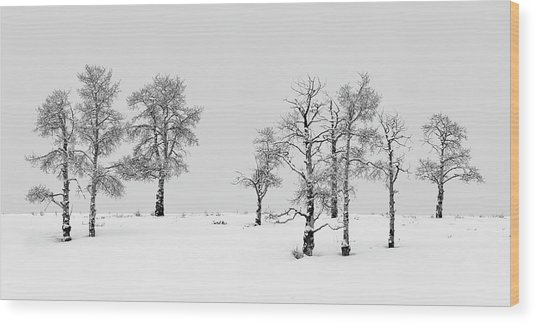 Aspen Tree Line-up Wood Print