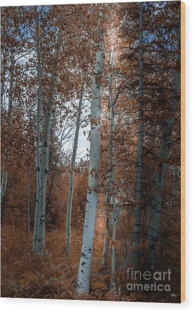 Aspen Trees Ryan Park Wyoming Wood Print