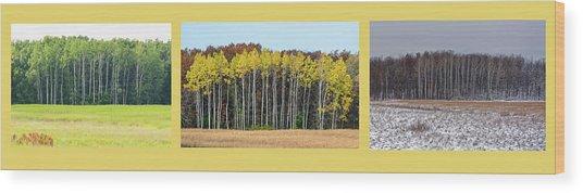 Aspen Triptych Wood Print
