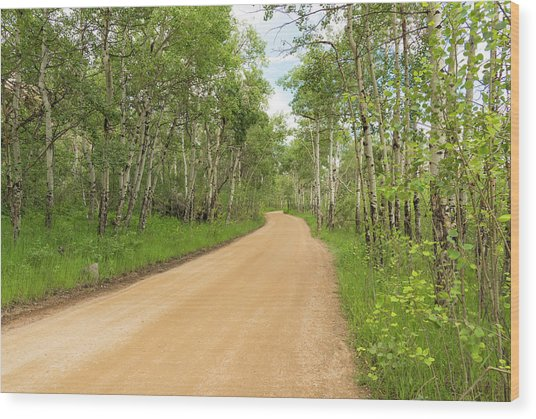 Aspen Way Wood Print