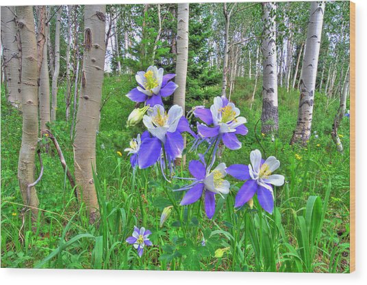 Aspens And Columbines Wood Print