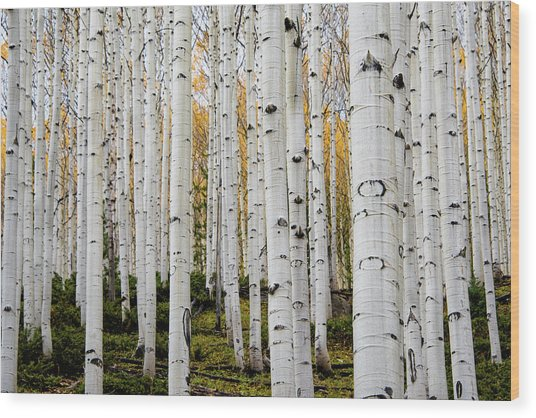 Aspens And Gold Wood Print