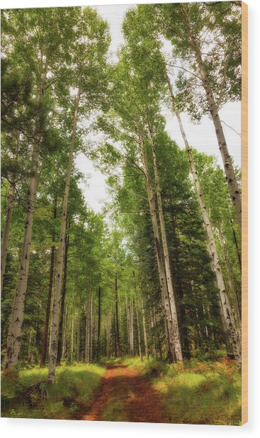 Aspens Galore Wood Print