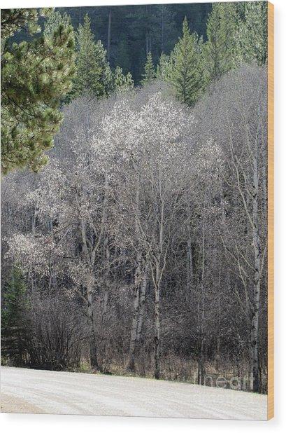 Aspens In Morning Light Wood Print