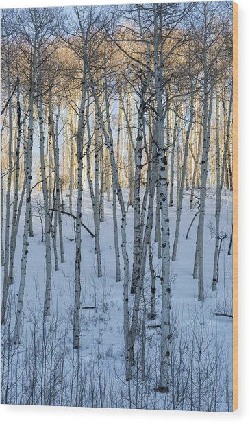 Aspens In Shadow And Light Wood Print