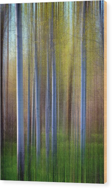 Aspens In Springtime Wood Print