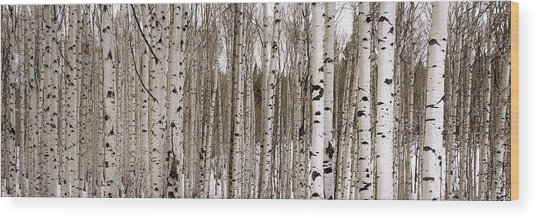 Aspens In Winter Panorama - Colorado Wood Print