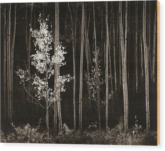Aspens Northern New Mexico Wood Print