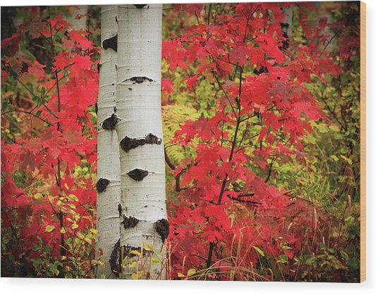 Aspens With Red Maple Wood Print