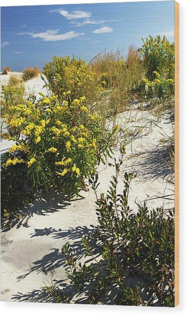 Assateague Beach 5 Wood Print by Alan Hausenflock