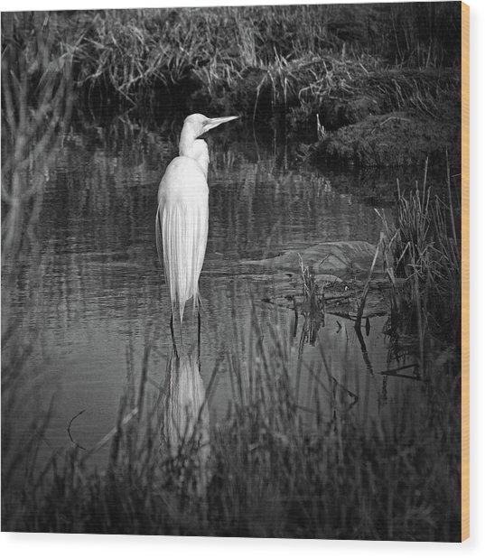 Assateague Island Great Egret Ardea Alba In Black And White Wood Print