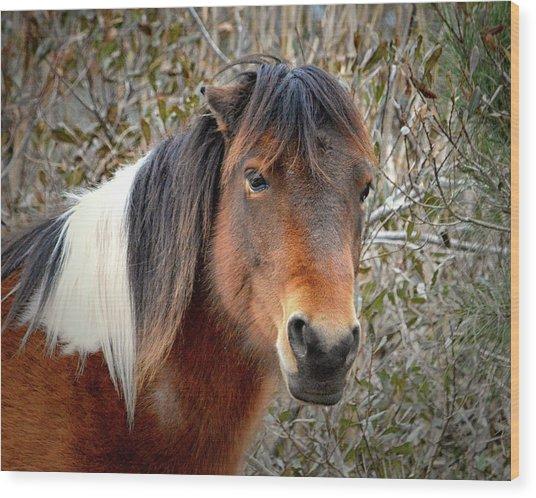 Assateague Island Pony Patricia Irene Wood Print