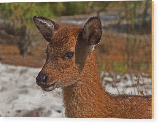 Assateague Island Sika Deer Fawn Wood Print