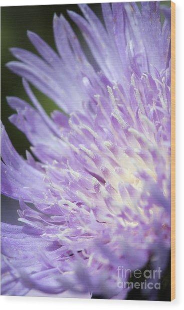 Aster Bloom Wood Print by Jeannie Burleson