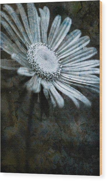 Aster On Rock Wood Print