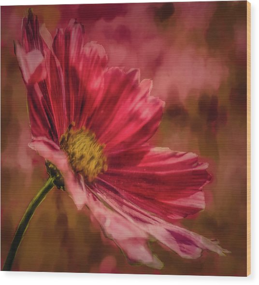 Aster Red Painterly #h1 Wood Print
