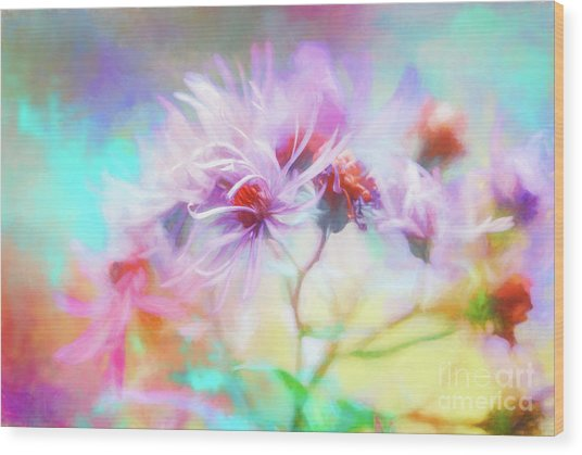Asters Gone Wild Wood Print