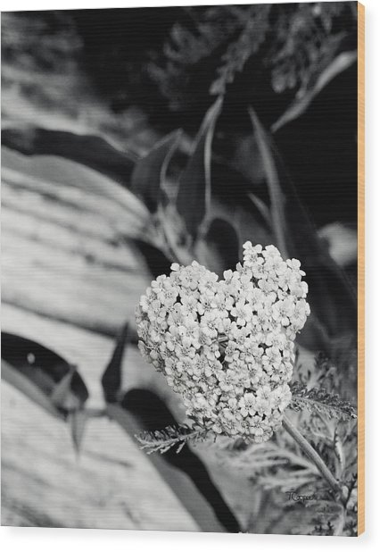 Astilbe Heart Wood Print