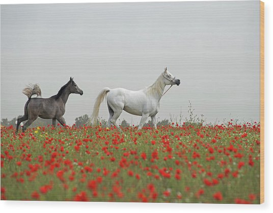 At The Poppies' Field... Wood Print