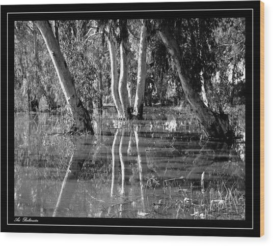 At The Swamp 2 Wood Print