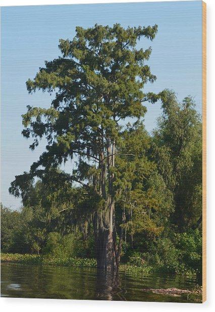 Atchafalaya Basin 11 Wood Print