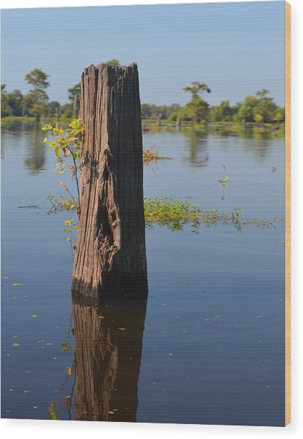 Atchafalaya Basin 22 Wood Print
