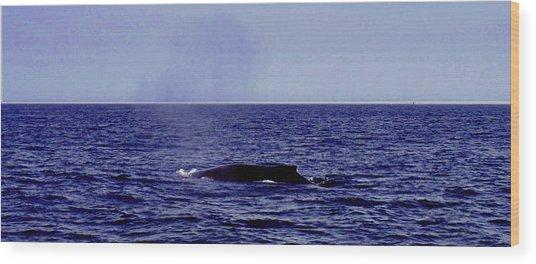 Athena's Whale Wood Print